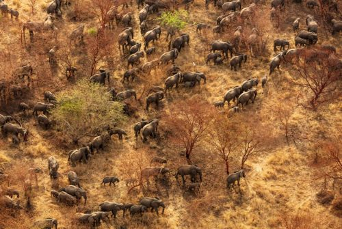 The Wyss Foundation Commits $108M to Protect Areas in Africa - TRAVELINDEX - TOURISMAFRICA