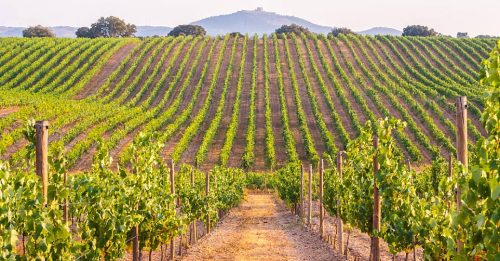 Innovation and Partnerships Make Wine Tourism Driver Rural Development - TOP25VINEYARDS - TOP25WINES - TRAVELINDEX
